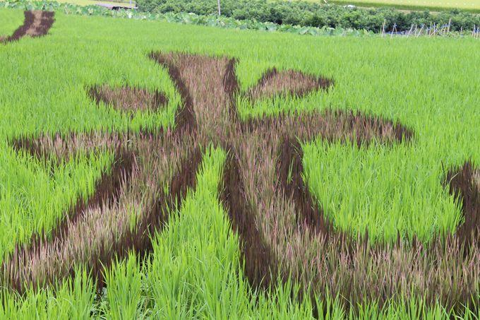 稲だけで描かれた、色鮮やかな田んぼアート