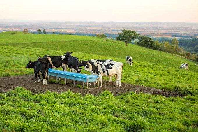 見えるのは草原と地平線、そして牛