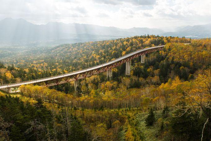 圧巻の巨大橋!北海道・三国峠の樹海ロードに見る絶景と清涼 | 北海道 | トラベルjp 旅行ガイド