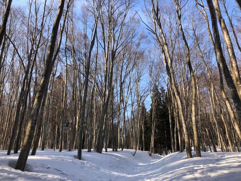「美人林」での自然探訪と森の学校「キョロロ」