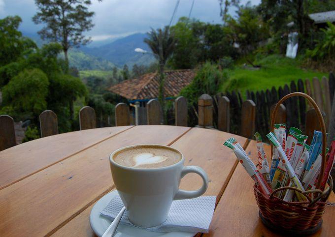 コーヒー農園にも行ってみよう