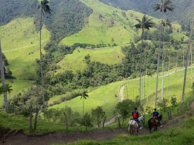 国立公園にも指定「ココラ渓谷」