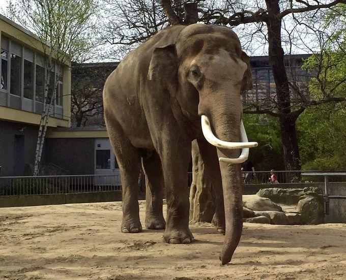 10.ベルリン動物園
