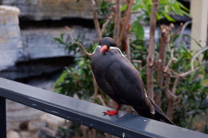 えっ?まるでダリ!ヒゲが可愛い鳥