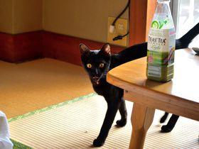 可愛い猫がお出迎え!伊豆・宇佐美温泉「海風荘」猫と温泉に癒されよう!