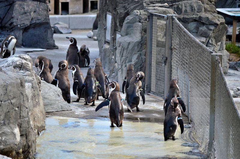 中学生以下無料!都内一安い「葛西臨海水族園」はペンギン天国でもあった!