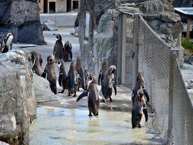 中学生以下無料!都内一安い「葛西臨海水族館」はペンギン天国でもあった!