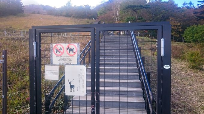 鹿進入禁止のゲートからスタート!