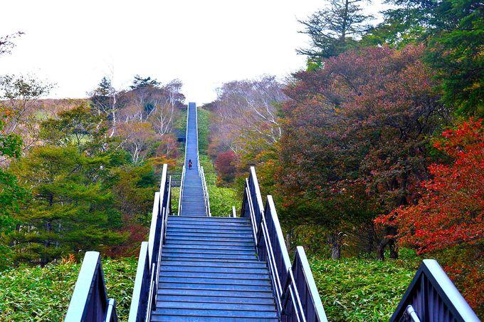 まさに天空への階段!