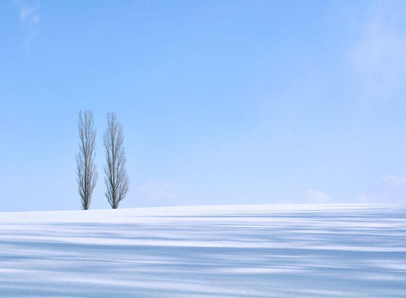 一度は行きたい!幻想的な雪の美瑛を満喫できる「ネイチャー・フォト・トレック」