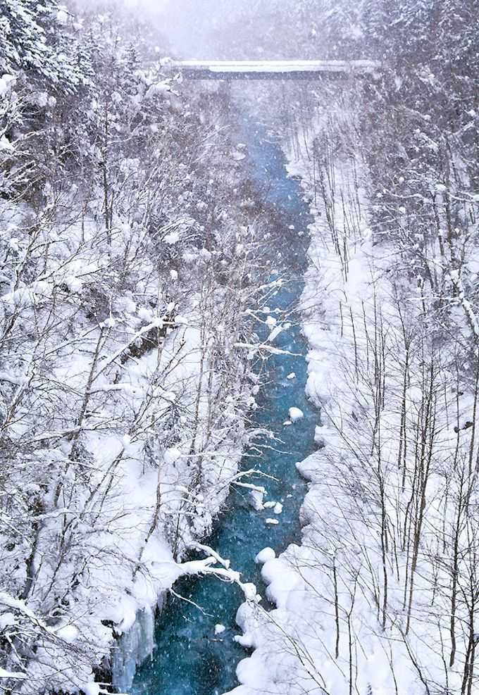 青と白のコントラストが美しい美瑛川、通称「ブルーリバー」のほとりへ