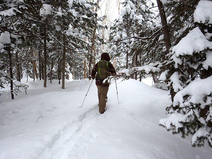 スノーシューを履いて雪に覆われた森の中へ