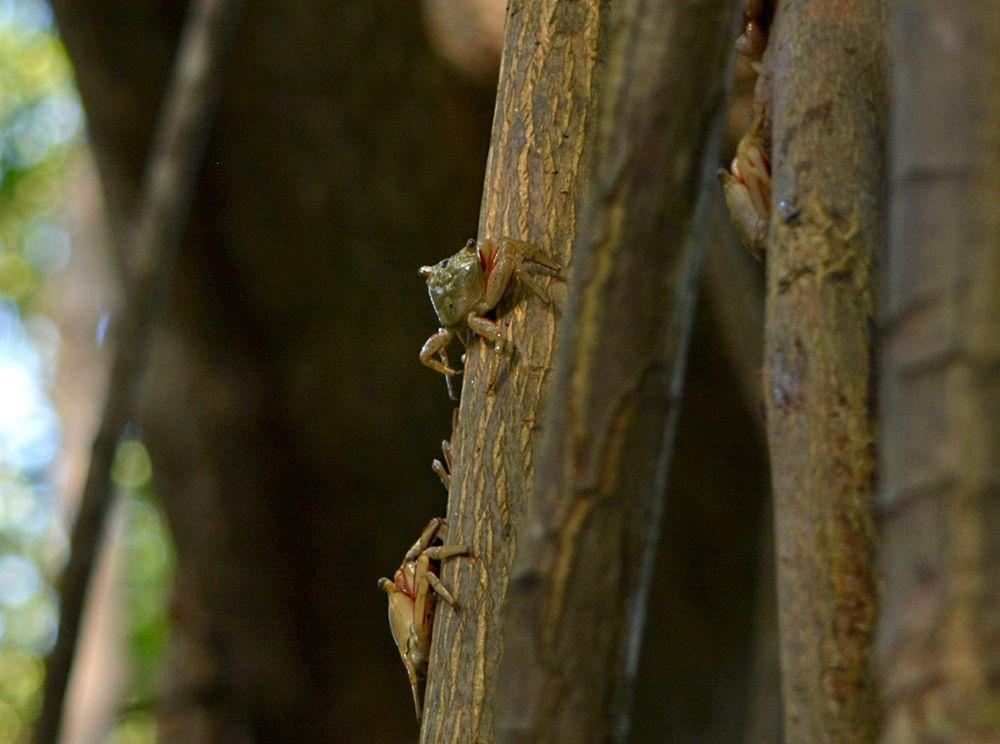 森の中で珍しい生き物に会えるかも