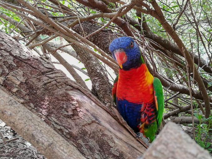 大きな鳥からカラフルな鳥まで、珍しい鳥類が勢ぞろい!