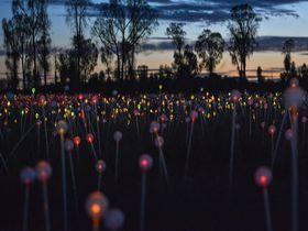 ウルルを彩る光のイベント「フィールド・オブ・ライト」で幻想的な夜を