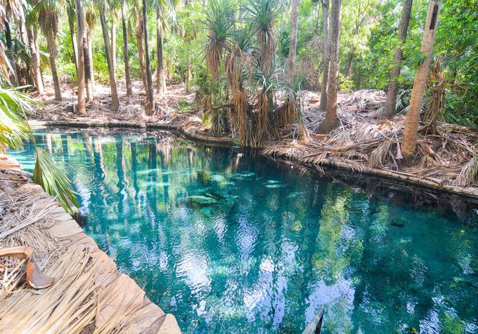 まるでオアシス!ジャングルに囲まれたマタランカ温泉