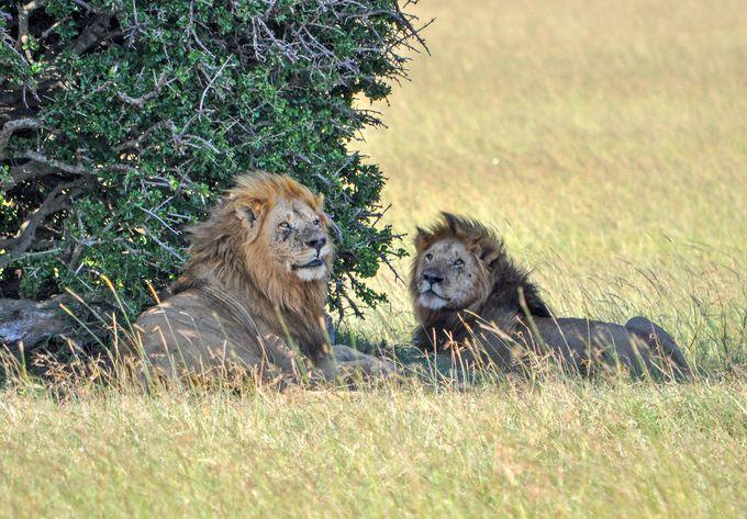 一番人気はライオン。連携プレーで会える確率UP!