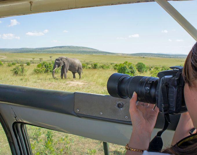 「サファリ」で動物の写真を撮るのに必要なレンズは?