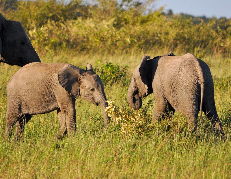 サファリにマサイ族!1泊2日ツアーで楽しめるマサイ・マラ国立保護区