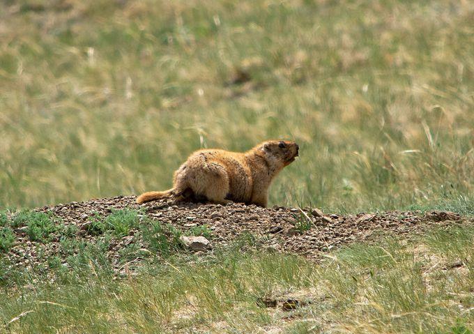 約50種類の哺乳類が生息するホスタイ国立公園