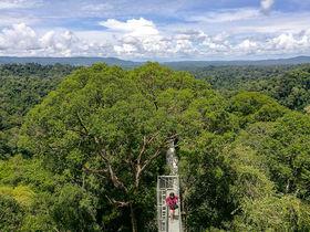 ブルネイの自然を満喫!「ウル・テンブロン国立公園ツアー」