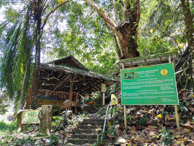 熱帯雨林の原生林をトレッキング