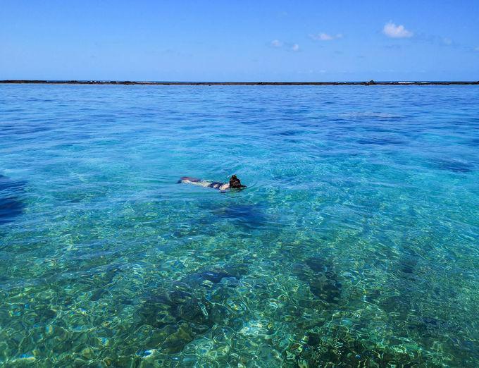 サンゴ礁の海でシュノーケリング。運が良ければジュゴンも!