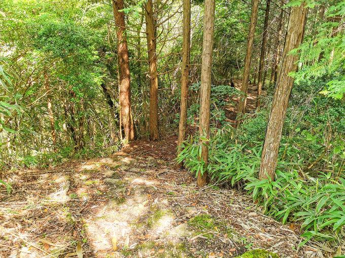 曽爾村の東海自然歩道を歩く