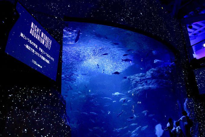 夜の水族館が満天の星につつまれる!