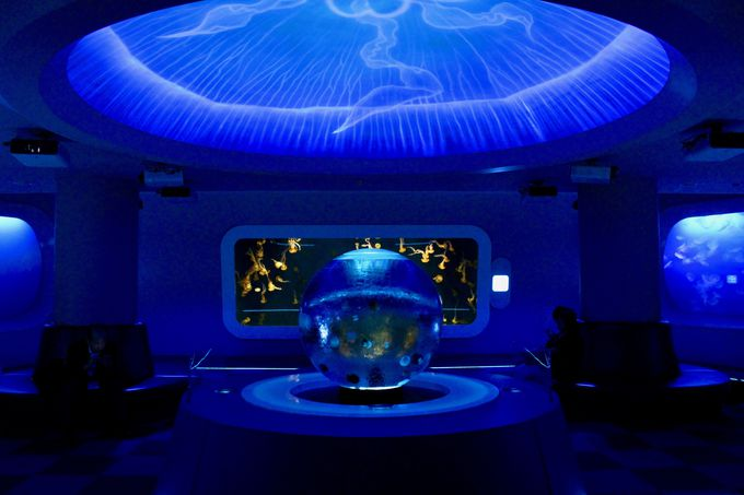 宇宙をゆったりと泳ぐ「クラゲの星」を観察