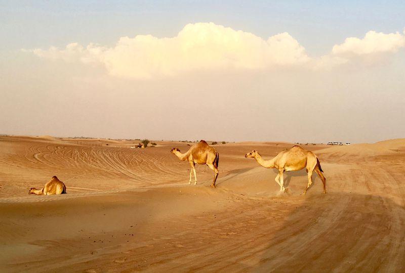 アトラクションみたい!4WDで砂漠を疾走!