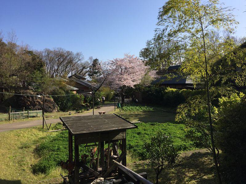 懐かしがいっぱい!伊豆「杜の湯 きらの里」は昔の日本にタイムスリップできる宿