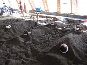 砂風呂に開聞岳の絶景も!指宿市のおすすめ観光スポット7選