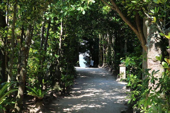 3.「備瀬のフクギ並木」2万本のトンネル