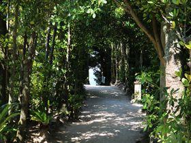 沖縄北部「備瀬フクギ並木」は人気上昇中の癒やしスポット
