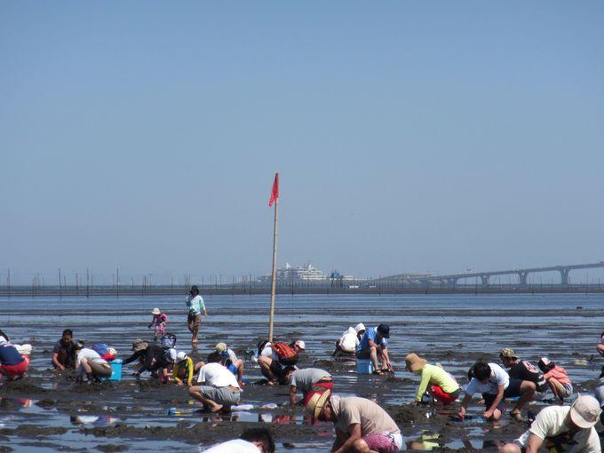 砂浜の小さい穴に注意しながら潮干狩りをがんばろう!