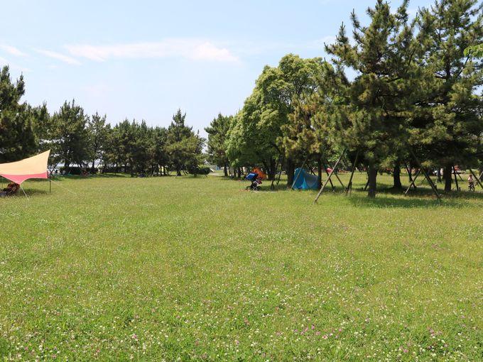 芝生が広がる広場ではピクニックがおすすめ