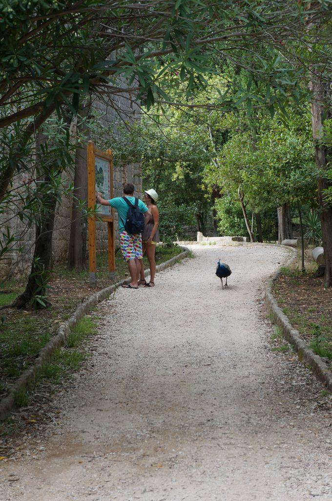 ロクルム島の住人たち
