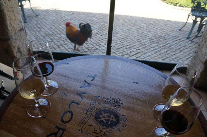 ポートワインの大生産地!世界に名だたるワイナリーたち