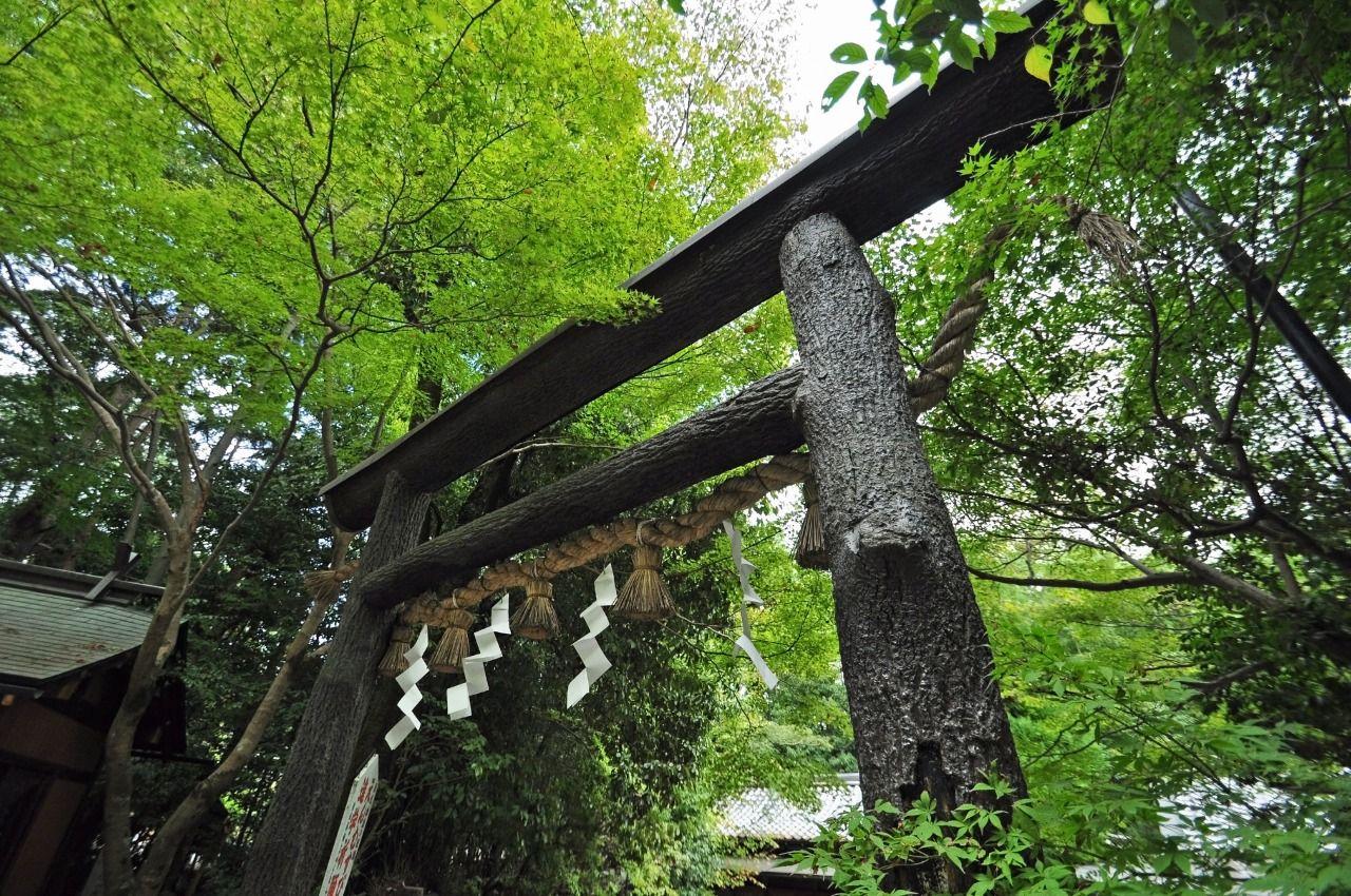 嵯峨嵐山駅から徒歩10分:野宮神社