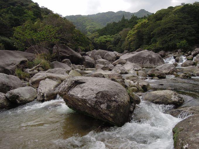おいしい空気が吸える横河渓谷