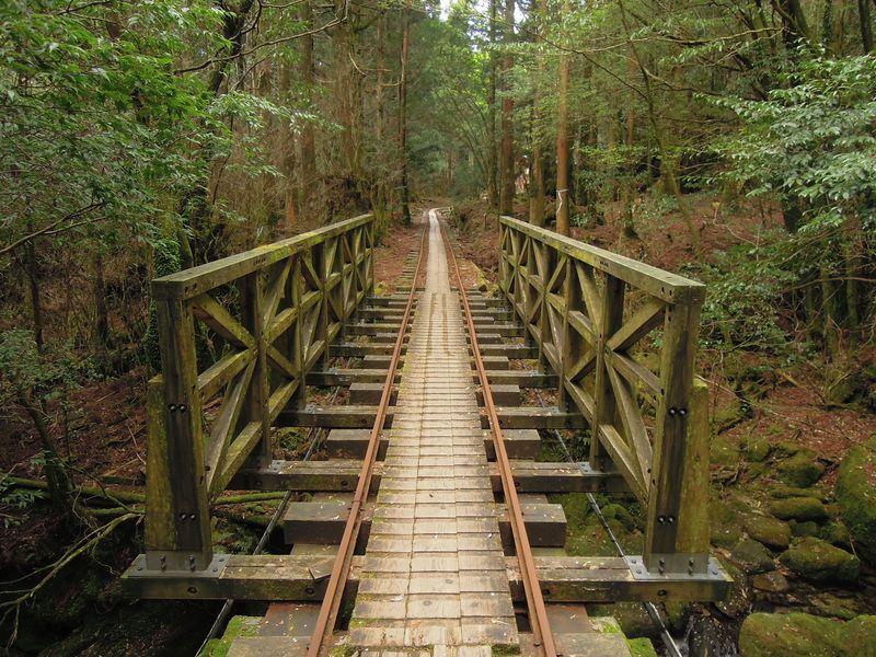 鹿児島県屋久島にて1日で「白谷雲水峡」と「縄文杉」を見る方法があった!