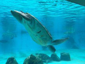 無料エリアが充実!沖縄「美ら海水族館」をもっと満喫しちゃおう