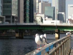 東京「品川駅」から徒歩圏内で楽しめる!癒しスポット5選