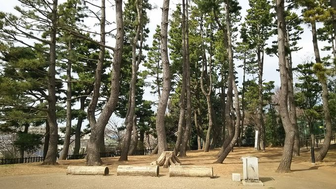 ピクニック気分で食べるなら「鵜の木松山公園」へ