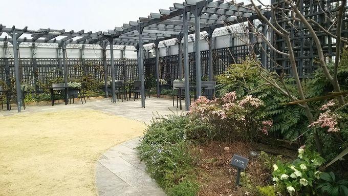 英国式庭園が素敵!マルイ「Q-COURT(キューコート)」