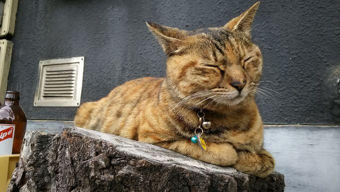 谷中銀座商店街で「七福猫」を探す