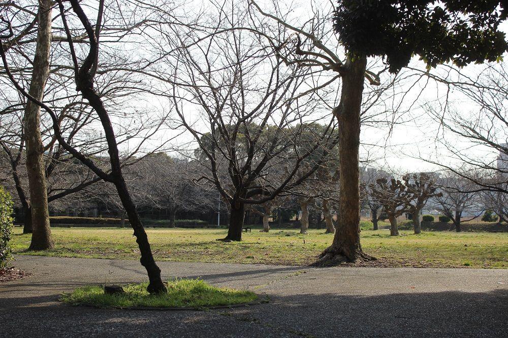 緑豊かな「京浜島ふ頭公園」