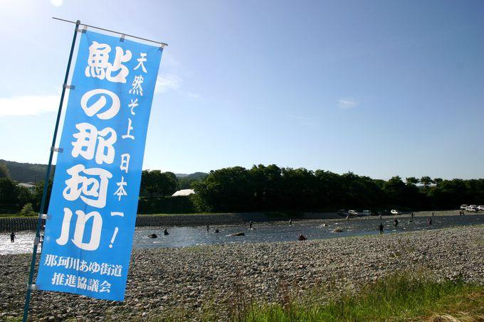 天然遡上日本一!! 鮎の那珂川