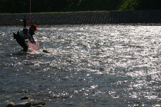 夏がやってくる、鮎の季節のはじまり